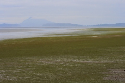 Mudflats at Padilla Bay