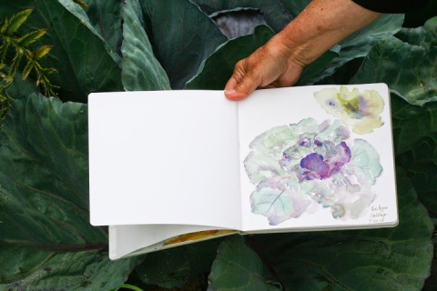 Bonnie's sketch of cabbage (those jewel-like colors!)