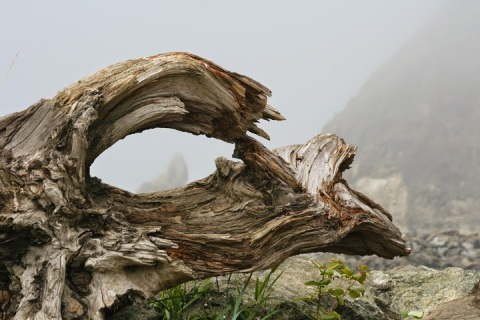 "Through the ""eye"" of driftwood"