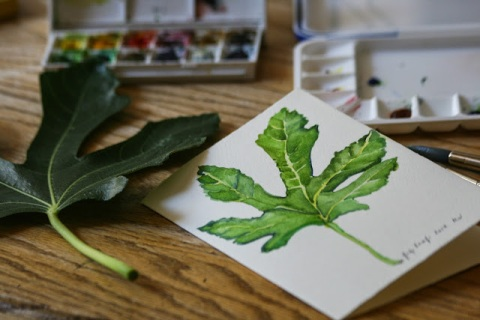 Making a watercolor sketch of a fig leaf