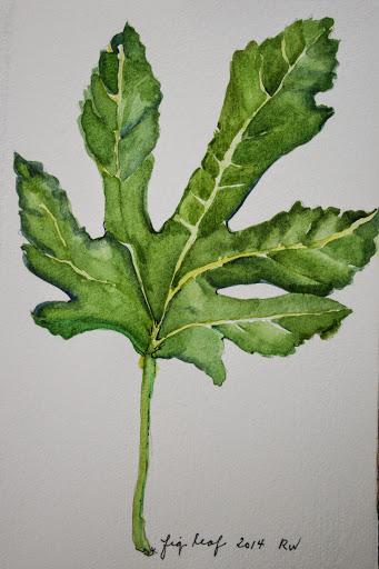 Watercolor sketch of fig leaf