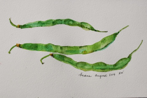 Watercolor sketch of green beans