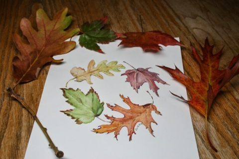 Watercolor sketch of fallen leaves