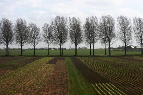 Bare trees, fallow fields