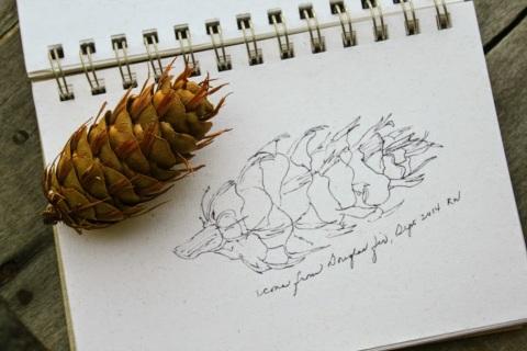 Sketch of Douglas Fir cone