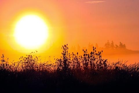 Foggy dawn near Chehalis, WA