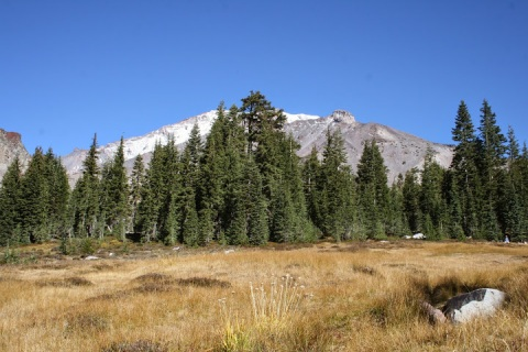 Mount Shasta near the tree line