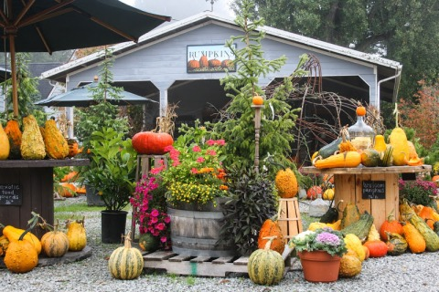 Autumn displays at Gordon Skagit Farm