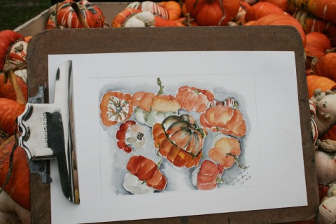My watercolor sketch of turban squashes