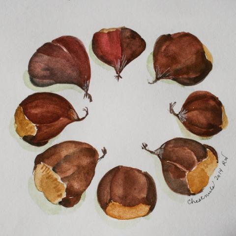 Watercolor sketch of chestnuts
