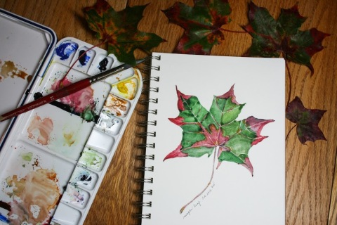 Another watercolor sketch of maple leaf