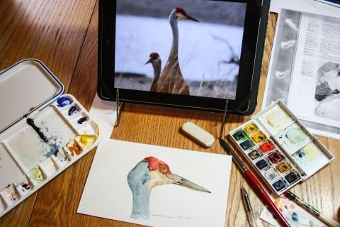 Watercolor sketch of sandhill crane