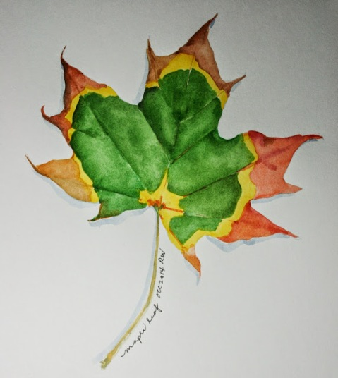 Watercolor sketch of maple leaf