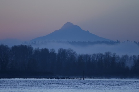 Foggy morning on the Columbia River, Mount Hood looms