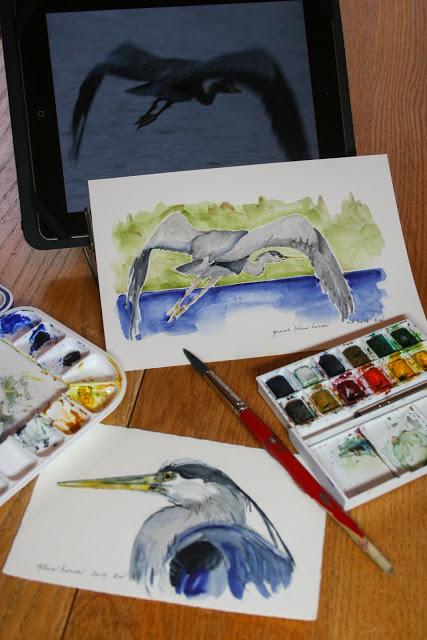 Watercolor paintings of great blue herons