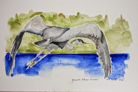 Watercolor painting of heron in flight