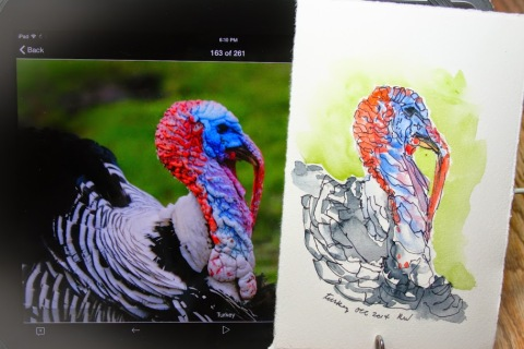 Watercolor and ink sketch of turkey