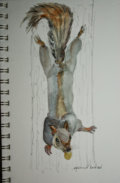 Watercolor sketch of squirrel acrobat