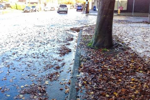 November on Greenwood Ave N