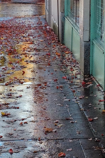 Wet pavement, between showers