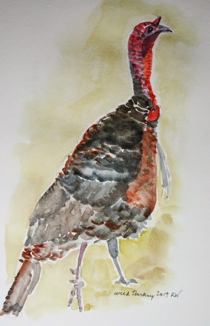 Watercolor sketch of wild turkey