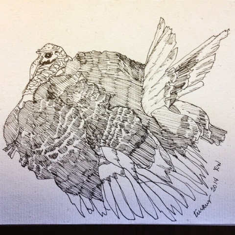 Ink sketch of domesticated turkey