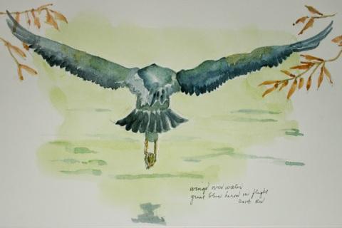 Wings over water, great blue heron in flight