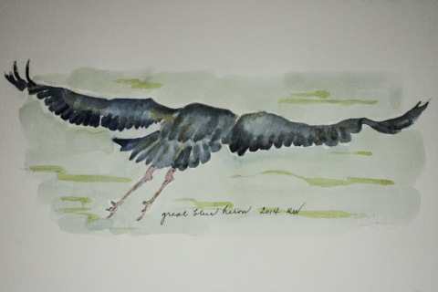 Watercolor sketch of great blue heron