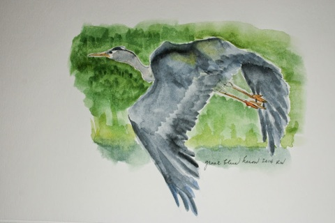 Another watercolor sketch of great blue heron