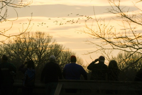 Bird watchers gather for the evening move to the roosts near the Rowe Sanctuary