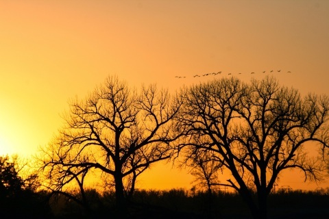 Cranes at sunset, from the bridge at Fort Kearney Historical Recreation Area