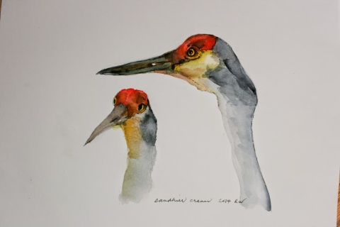 Watercolor sketch of sandhill cranes