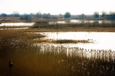 George C Reifel Migratory Bird Sanctuary