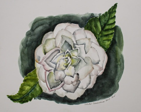 Watercolor sketch of white camellia