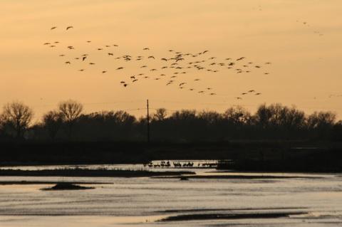 Sandhill cranes return to the Platte River