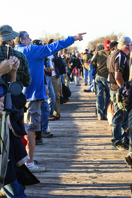 Bird watchers gather for the massive return to the roost at sunset.