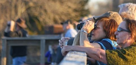 Birdwatchers along the Fort Kearney Historical  Recreation Site bridge