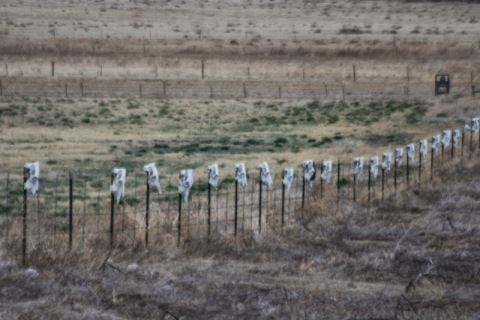 Fence posts capped by cow skulls