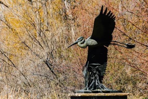 Blue Heron by Hollis Williford