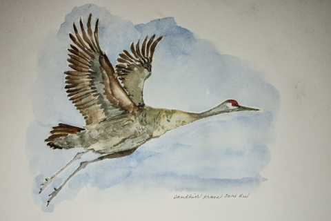 Watercolor sketch of sandhill crane