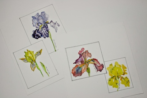 My watercolor sketches made on site in Kitty's garden