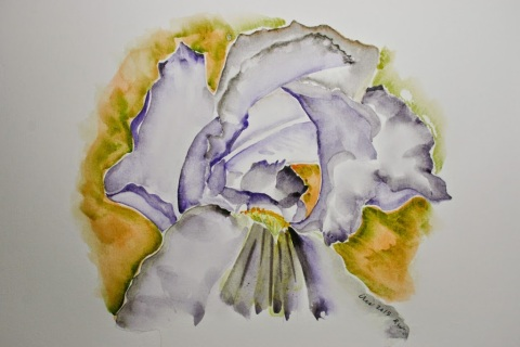Watercolor sketch of iris made later from a photos
