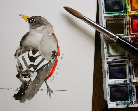 Another watercolor sketch of a robin