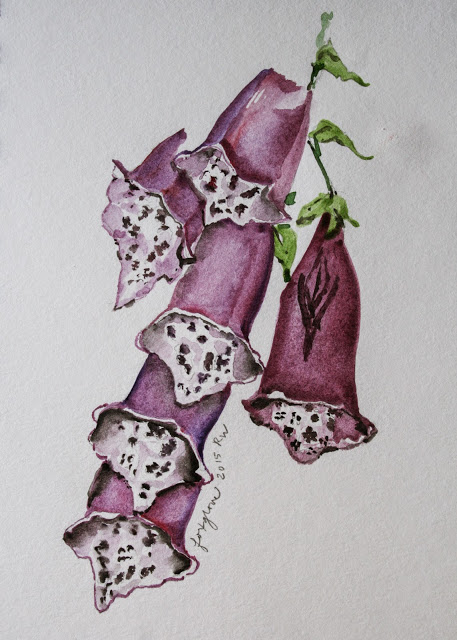 Watercolor sketch of foxglove