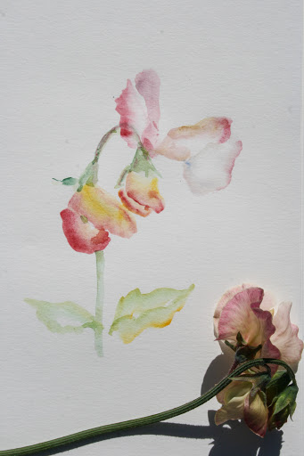 Watercolor sketch of sweet peas