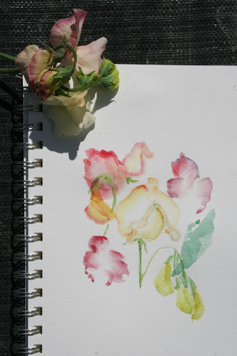 Another watercolor sketch of sweet peas