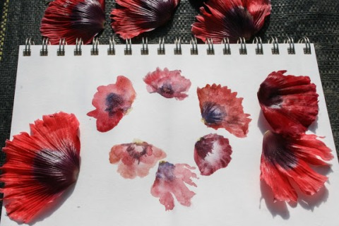 Watercolor sketch of poppy petals