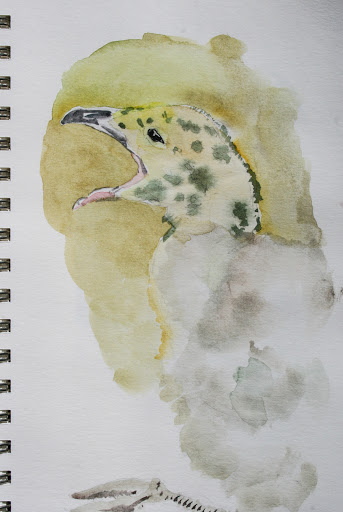 Watercolor sketch of baby seagull