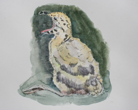 Another watercolor sketch of baby seagull