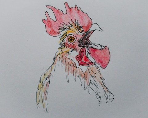 In k and colored pencil sketch of rooster